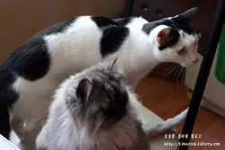 고양이 캣잎 하나만 있어도 고양이와 친해질수 있는 고양이 캣잎
