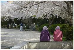 벚꽃. 휴식.