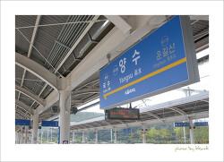 서울 근처, 연꽃 구경 어디로 갈까? 세미원 vs 관곡지