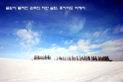 끝없이 펼쳐진 순백의 하얀 설원, 홋카이도 비에이