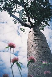 Lomo LC-A+, 바오밥나무