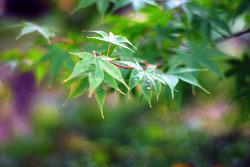 가을의 속삭임