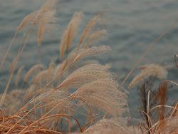가을소나타
