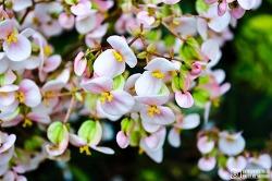 아침고요수목원 (이른 봄꽃을 겪다)