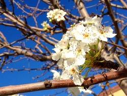 봄의 소리