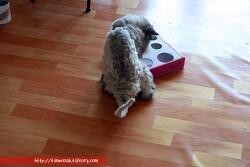 고양이가 좋아하는 장난감 리폼 된 피자박스 장난감에 빠진 모습