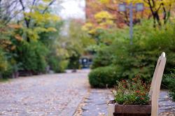 가을 끝자락 대학 교정 산책