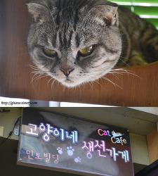 [수원 고양이카페,애묘카페,애견카페] 수원역 고양이네 생선가게