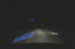(로드킬)한밤 계룡산 시골길에서 발생한 고라니 충돌 교통사고