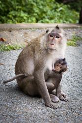 껀저(Cần Giờ) 원숭이섬_베트남(세환, 윤하와)