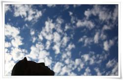 하늘을 보니