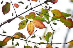 가을 사진