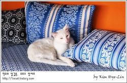 [적묘의 모로코]탕헤르 숙소에서 만난 사람들, 그리고 고양이