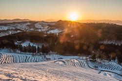 보성녹차밭의 겨울