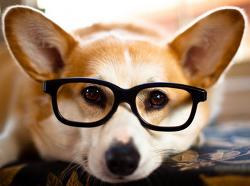 나의 숙원 구매사업 페레가모 선글라스 구입과 선글라스 도수 넣기