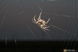 거미 (Spider)의 집짓기