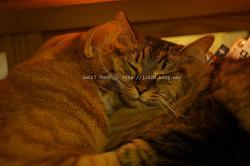커플 데이트장소 안양 고양이까페 니아니아