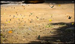 각종 나비들 몽땅 플라잉 샷~~