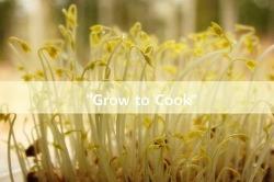 기르고 요리하기, 팥나물 새싹 10일 재배 일기
