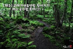 [제주] 교래자연휴양림 찾아가기 : 제주 곶자왈 투어(2)