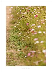 #05. 당수동 시민농원 풍경