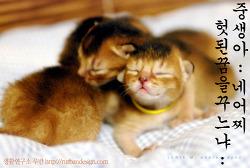 [부처님과 고양이]인간과 친구가 된 고양이의 사정