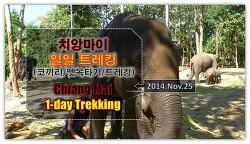 치앙마이 당일 트레킹 (Trekking, 트래킹) 하기! 코끼리타기, 대나무래프팅, 폭포수영, 초보자코스.