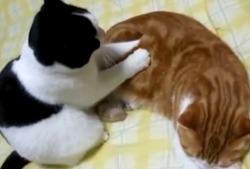고양이 안마시술소.swf