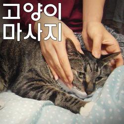 고양이 마사지, 어렵지 않아요!