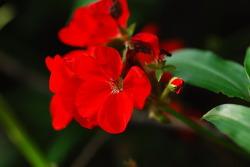 2013년 6월의 꽃사진