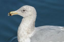 기사문항의 수리갈매기 x 큰재갈매기 4회 겨울깃을 다시 만나다