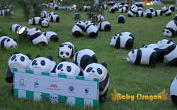 1600 Pandas+ KR World Tour Project in Korea