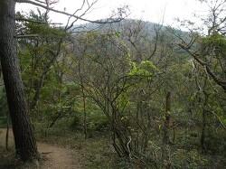 숫모르 숲길 - 한라생태숲 2