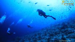 인도네시아 라자암팟 스쿠버 다이빙 영상