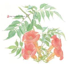울타리에 능소화가, 늪에는 연꽃이