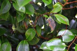 야외활동 중 동백나무 차독나방을 조심합시다.