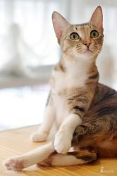 [고양이카페] 나 섹시하냐옹? ㄷㄷ 고양이카페 고양이