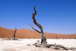 아프리카 캠핑카여행 Day 13 (Part 1/2) - 나미비아 나미브사막 세스림 캠핑장 ( Sesriem Campsite ) /  데드 블레이 (Deadvlei)