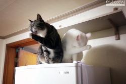 [고양이 그루밍] 누나 등 긁어 주세요.