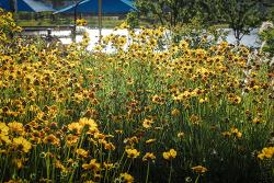 아련한 꽃 사진