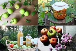 텃밭 가을 걷이로 만든 두가지 사과+토마토+호박 효소
