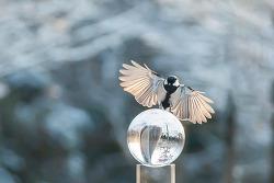 새들과 놀기