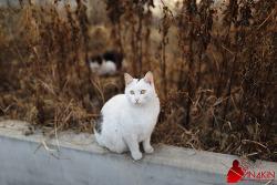[하양이] 다채로운 표정의 다크냐이트! 냐옹!! :D