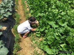 [질울고래실마을 농촌체험] : 어린이집 행사 - 아빠와 나들이