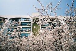4월_봄의 시작