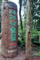 [제주도] 꼭 가볼 곳 - 사려니숲길 (추천)
