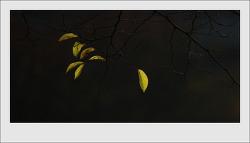 잎사귀 하나가 가지를 놓는다..