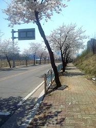 점심시간의 여유 [봄 산책]