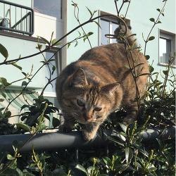 이탈리아 길고양이 / 고양이 인생 외줄타기 인생