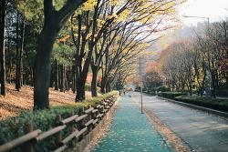 [서울산책] 빛 좋은 가을날 동네 한바퀴 -2